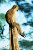 Photo Sitting monkey