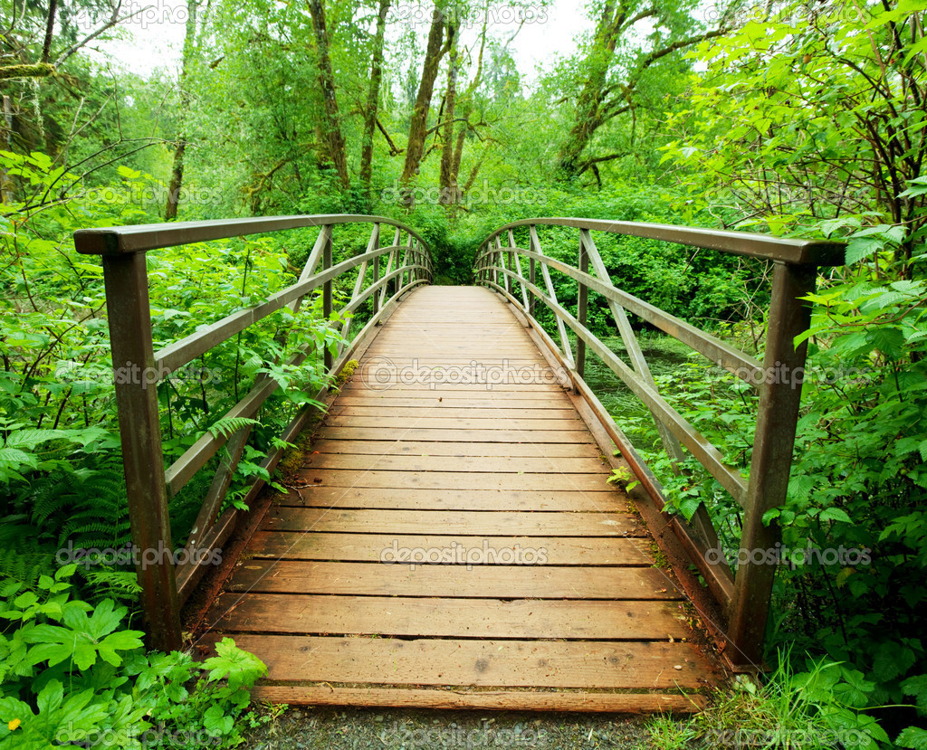 Boardwalk in green forest