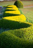 Fotografie zelený park