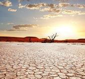 Fotografie Namibská poušť