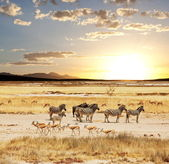 Photo Safari in Namibia