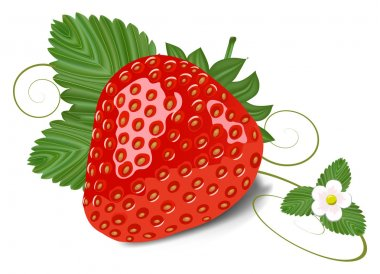 Strawberry with leaves and flowe