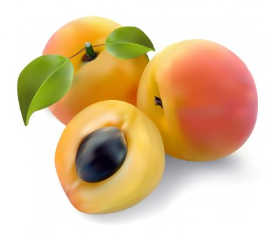 Apricot vector