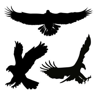 Silhouette a birds