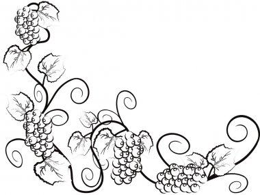 The background of Grape vine