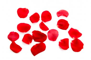 Red rose petals over white background stock vector