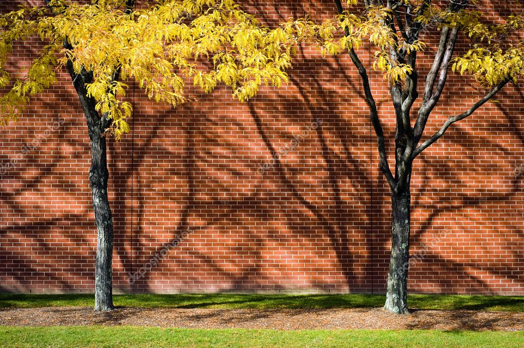 Two yellow trees against brick wall