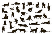 Fotografia silhoettes gatti