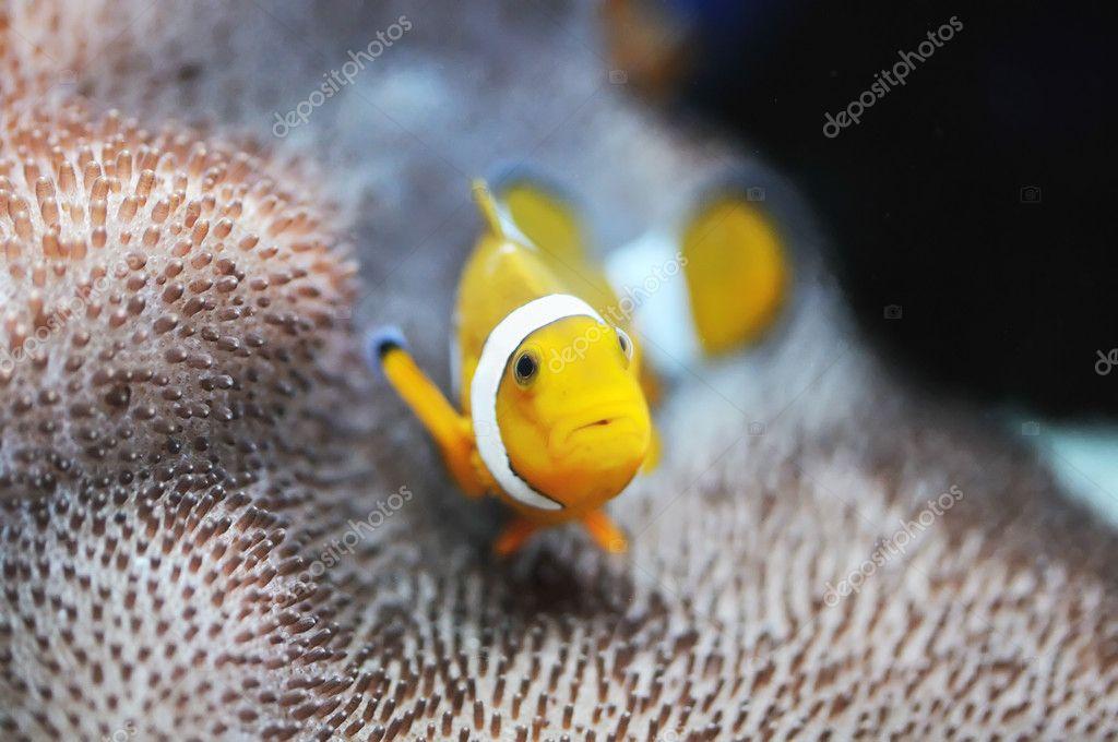 Nemo..