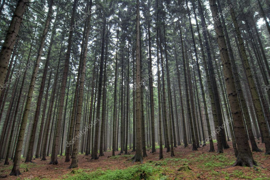 coniferous forest Definition of coniferous in the audioenglishorg dictionary meaning of coniferous what does coniferous mean proper usage and pronunciation (in phonetic transcription) of the word coniferous.
