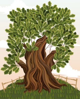Vector illustration of an old oak tree stock vector