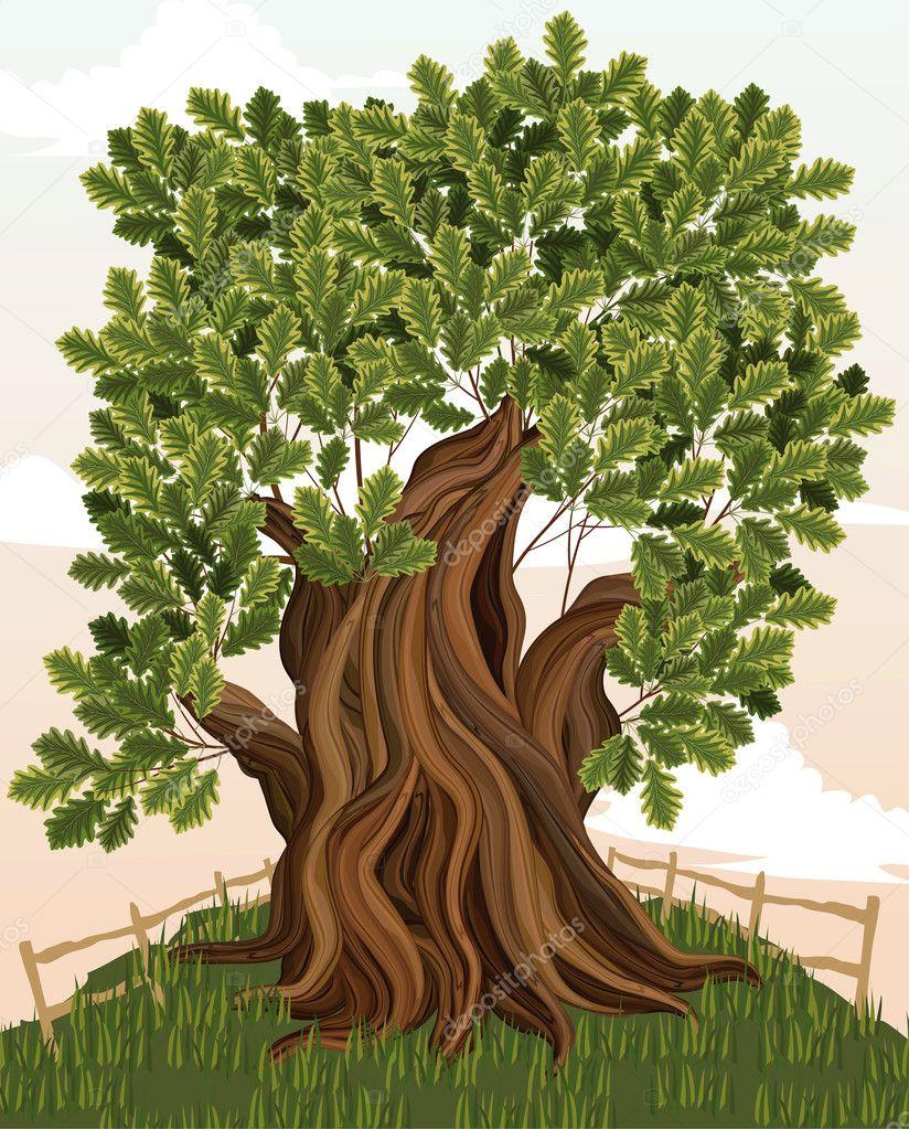 Vector illustration of an old oak tree stock vector