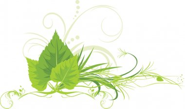 Birch leaves with grass and decorative ornament