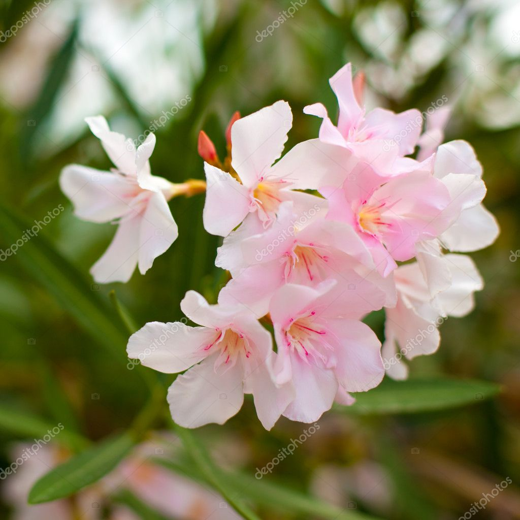 Pink bush flowers on a green leaves background