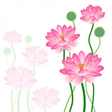 Realistic Oriental lotus.