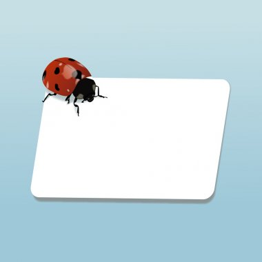 Ladybugs notes
