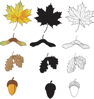 A set of maple and oak leaves