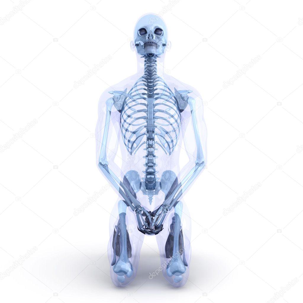 sitzend Anatomie — Stockfoto © Spectral #5257976