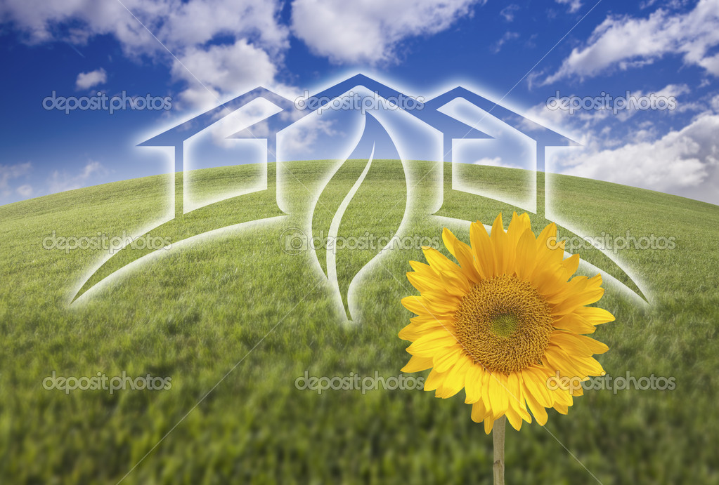 Sunflower, Green House Ghosted Over Fresh Grass and Sky
