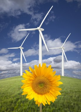 Wind Turbines Against Dramatic Sky with Bright Sunflower