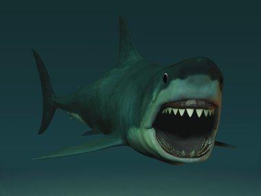 Great white shark ready to bite.