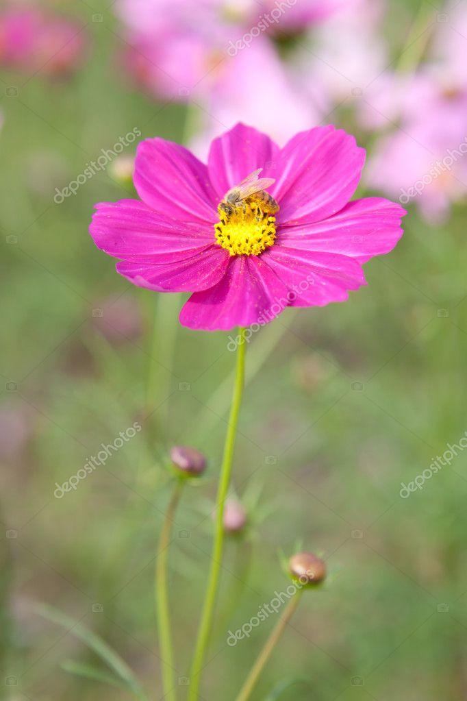 Фотообои Цветок космос