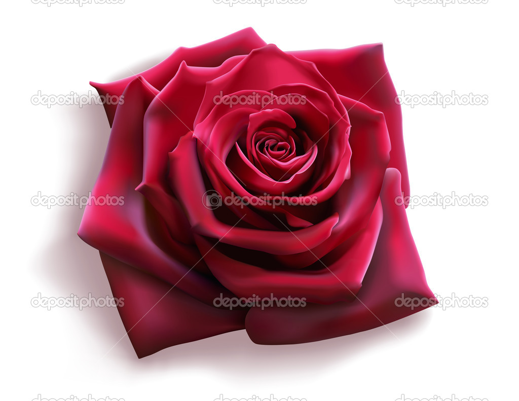 Red Rose (vector)