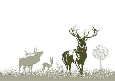 Wild animal, deers
