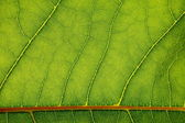 Fotografie textura zelený list