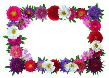 Colorful aster floral frame