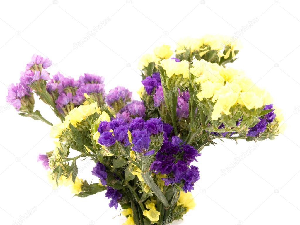statice flowers limonium sinuatum stock photo mrsnstudio