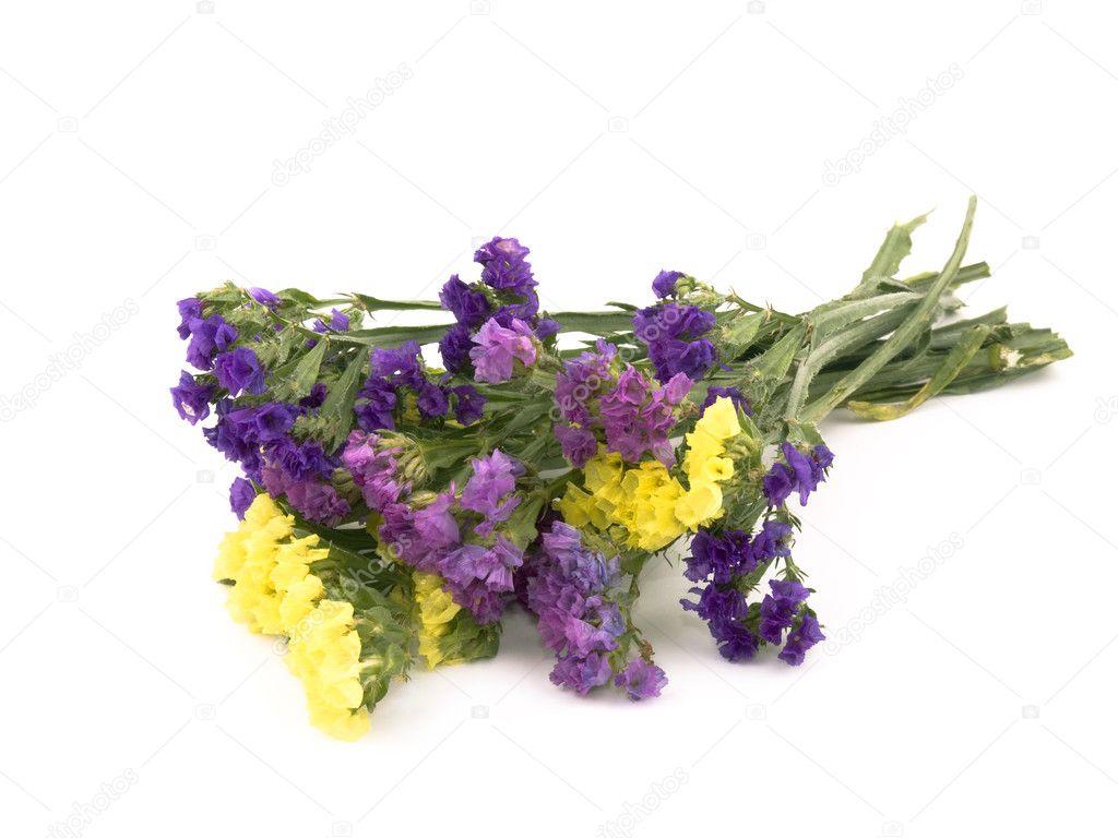 Statice flowers limonium sinuatum stock photo mrsnstudio 4856153 bouquet of beautiful statice flowers on white background photo by mrsnstudio mightylinksfo