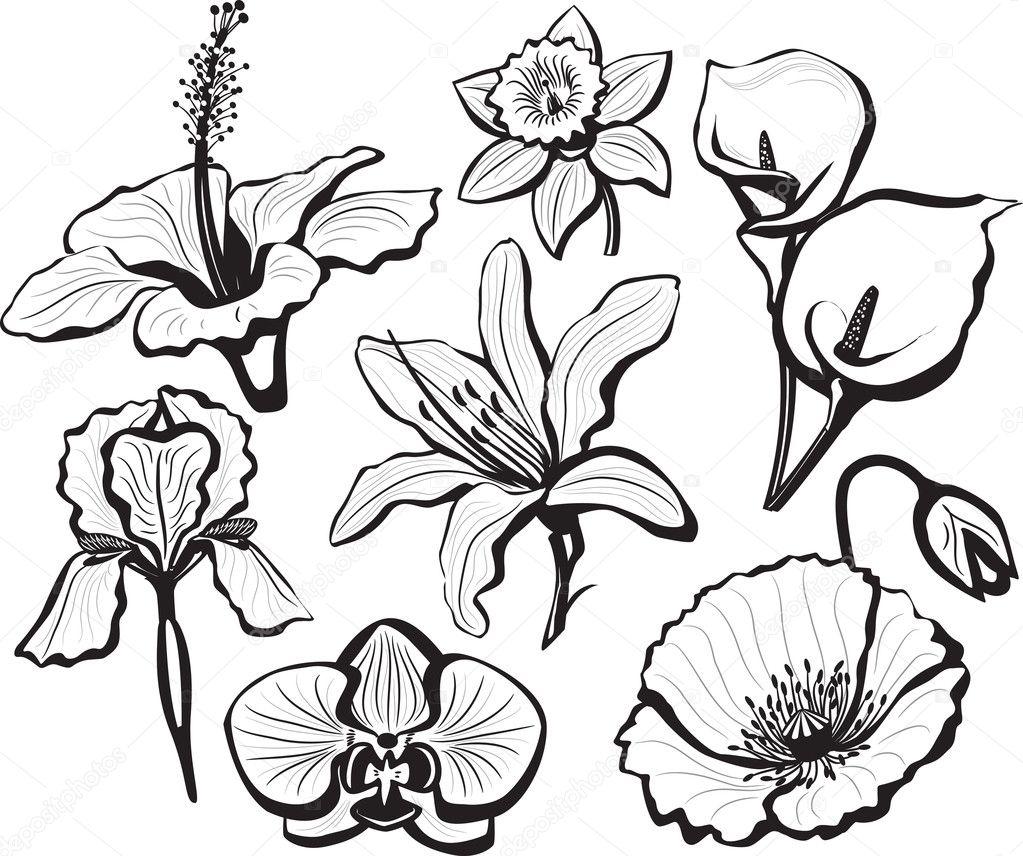 Set of flower heads