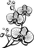 Fényképek Orchidea virágok vázlat