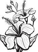 Vázlat a hibiszkusz virágok