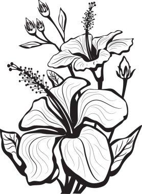 Sketch of hibiscus flowers