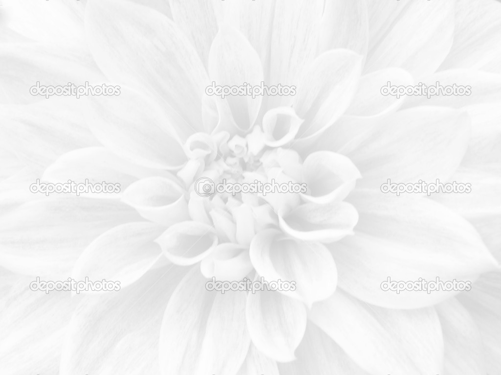 White flower background stock photo reddees 4446869 white flower background stock photo mightylinksfo Image collections