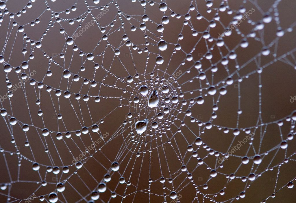 Web with water drops