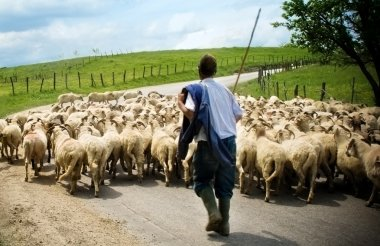 "Картина, постер, плакат, фотообои ""пастух со своими овцами "", артикул 4943221"