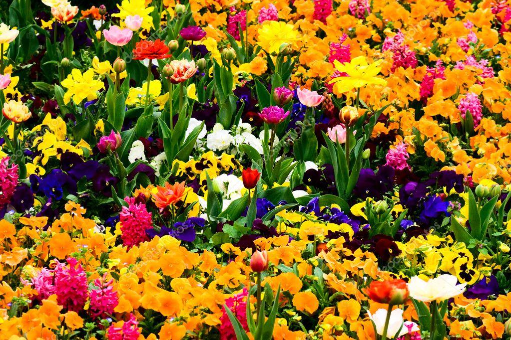 Amado jardim cheio de flores — Stock Photo © dundanim #4942859 WE58