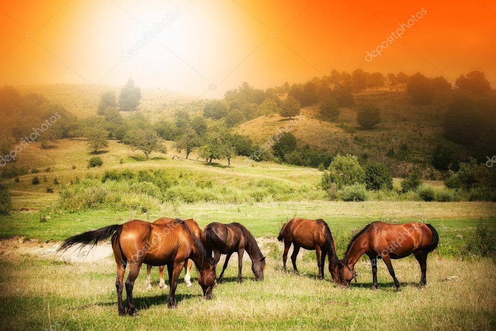 Фотообои Wild horses on green field and sunny sky