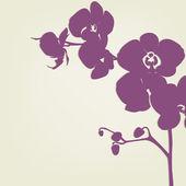 Fényképek orchidea