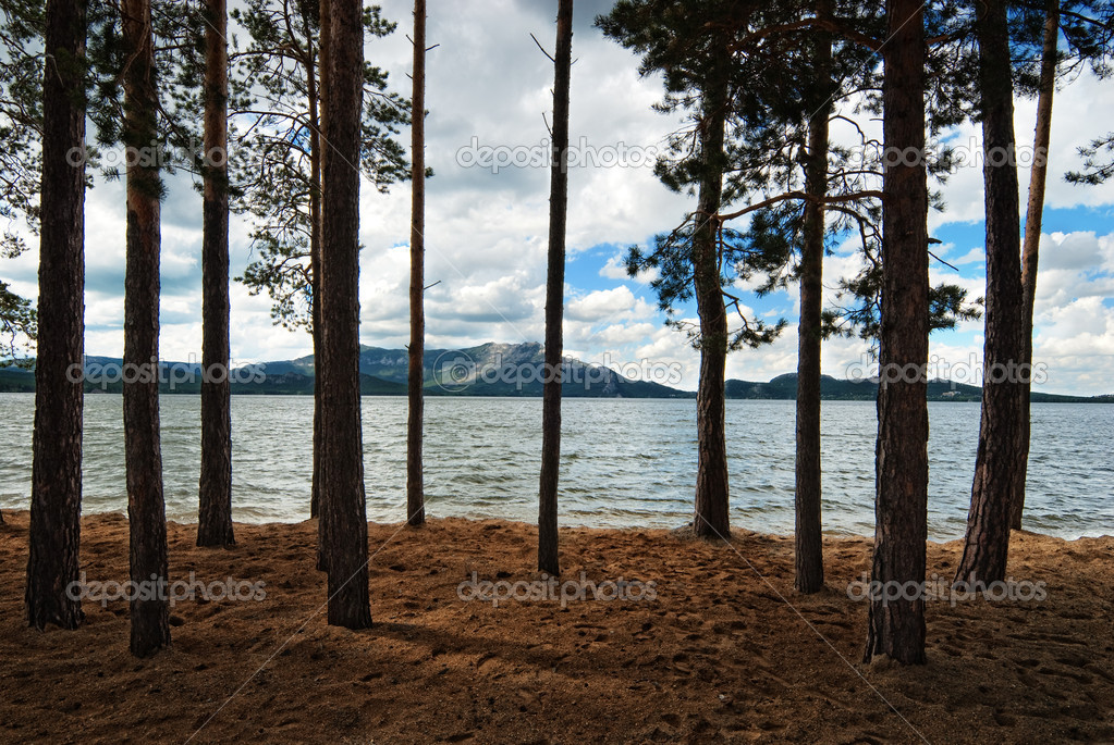 Forest beside lake Borovoe, Kazakhstan