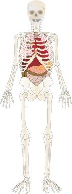 Vector the Skeleton