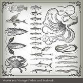 Vektorové sada: ryby pozadí