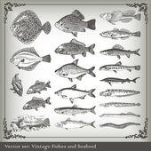 Fotografie Vektor-Satz: Fisch Hintergrund