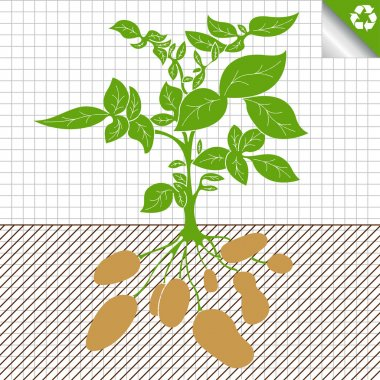 Potato plant bush vector concept background