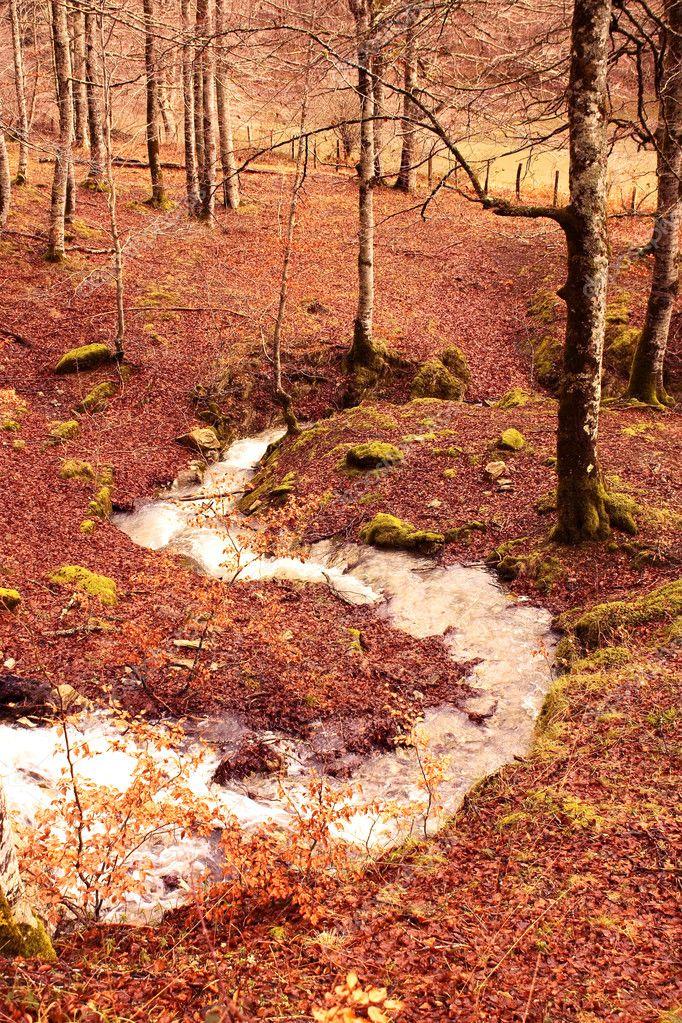 Creek in Jungle of Irati. Navarra, Spain