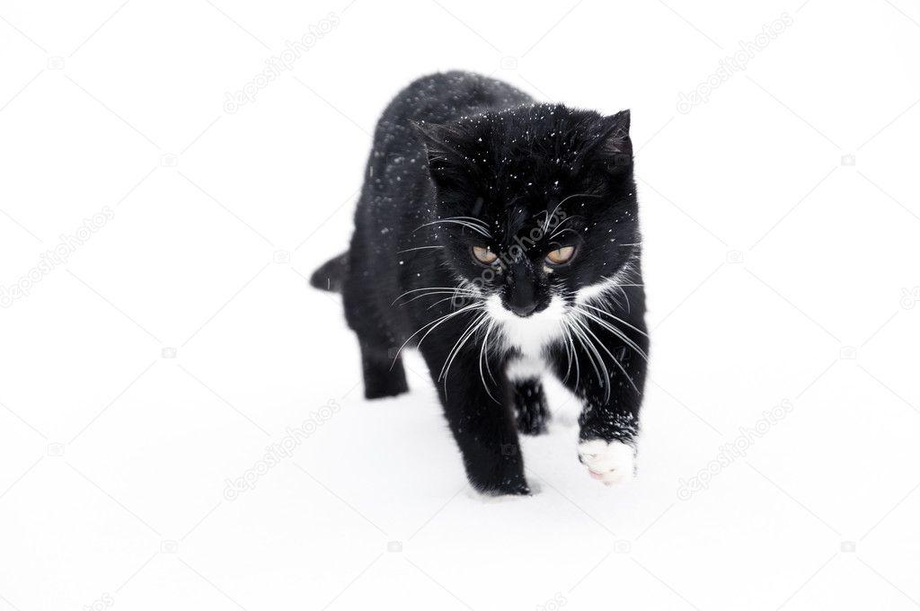 Черный кот снег