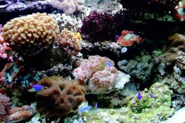 Beautiful coral and coral fish